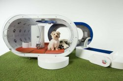 Dream Dog House � ������� ��� ��� ����� �� Samsung