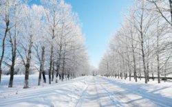 Как провести время зимой?